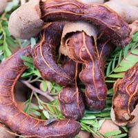 Fresh Raw Tamarind 03