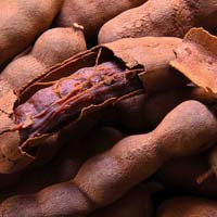 Fresh Raw Tamarind 04