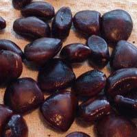 Tamarind Seeds 01