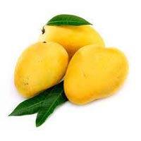 Fresh Alphonso Mango 01