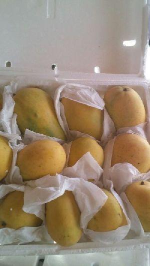 Fresh Mango 03