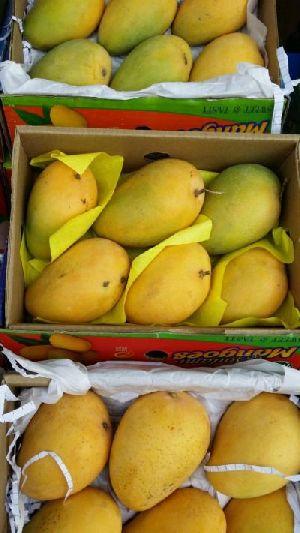 Fresh Mango 07