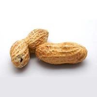 Monkey Nuts 01