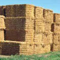 Best Quality Alfafa Hay,Timothy Hay, Alfafa in Bales