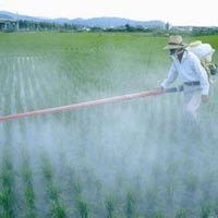 Chemical Fertilizer Spray Service
