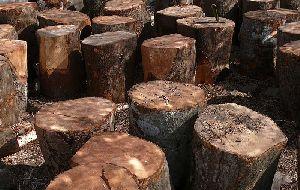 Mango Wood 01