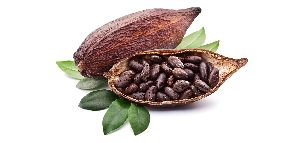 Cocoa Beans 01