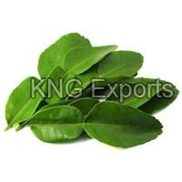 Fresh Lime Leaves