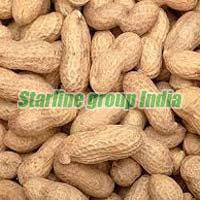 Groundnut 01