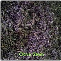 Clove Stem