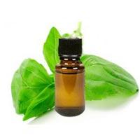 Basil Oil (CO2 Based Oil) 02
