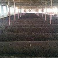 Organic Vermicompostvermicompost Manufacturers In Jammu