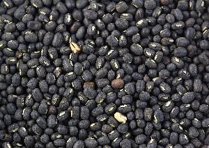 Whole Black Urad Dal 02