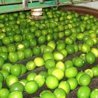 Fresh Green Lemon 01