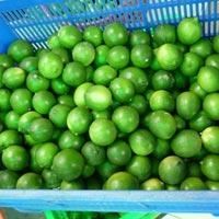 Fresh Green Lemon 03