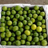 Fresh Green Lemon 04