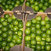 Fresh Green Lemon 05