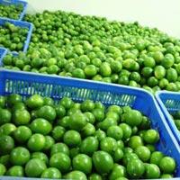 Fresh Green Lemon 06