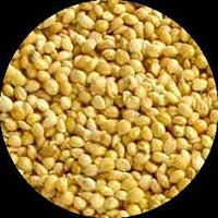Yellow Millet Seeds