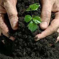 Organic Biofertilizer 02