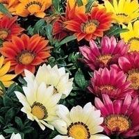 Seasonal Flowering Plants