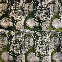 Georgette Printed Viscose Fabric 01