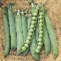 Green Peas Seed 04