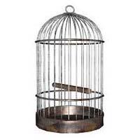 Bird Cage 02