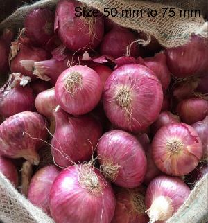 Fresh Red Onion 02