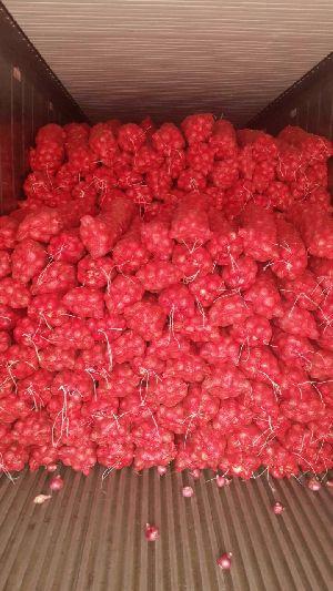 Fresh Red Onion 03