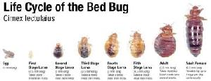 Bed Bug Control Treatment Services 02