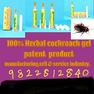 Cockroach Control Treatment Service 02