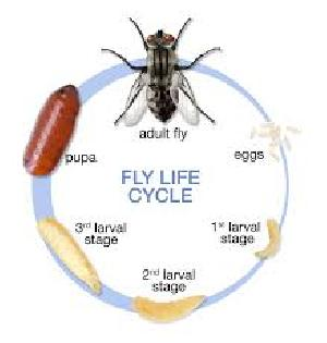Flies Control Treatment Service 01