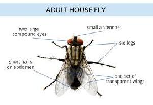 Flies Control Treatment Service 02