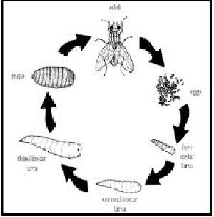 Flies Control Treatment Service 04