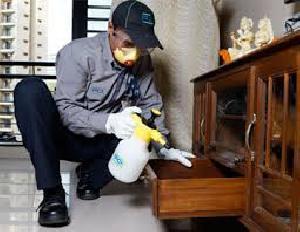 Wood Borer Control Treatment Service 01