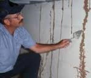 Wood Borer Control Treatment Service 02