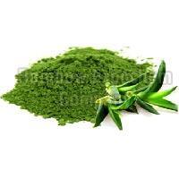 Aloe Vera Leaf Powder