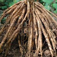 Shatavari Roots