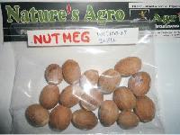 Nutmeg 02