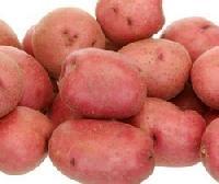 LR Potato