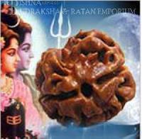 2 Mukhi Rudraksha