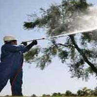 Tree Spray Oil