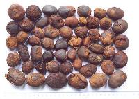 Ox Gallstones