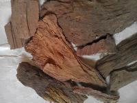 Arjuna Bark ( Terminalia arjuna)
