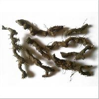 Nagarmotha Roots