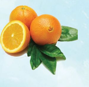 Navel Orange 02