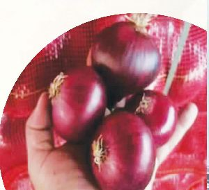 Red Onion 03