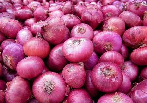 Red Onion 04