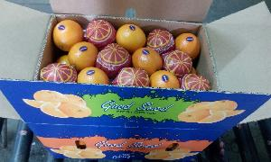 Valencia Orange 04